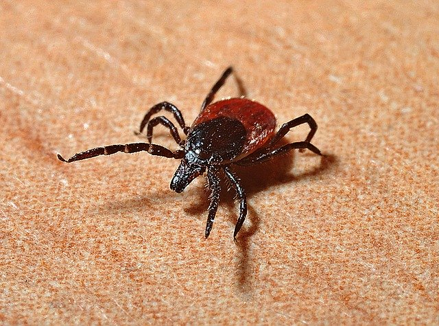 Vector-Borne Illness: Lyme disease and Malaria