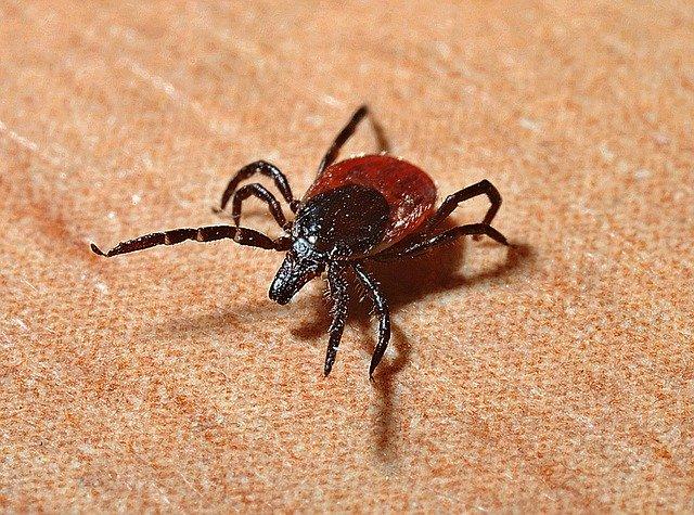 Vector-Borne Illness: Lyme disease and Malaria